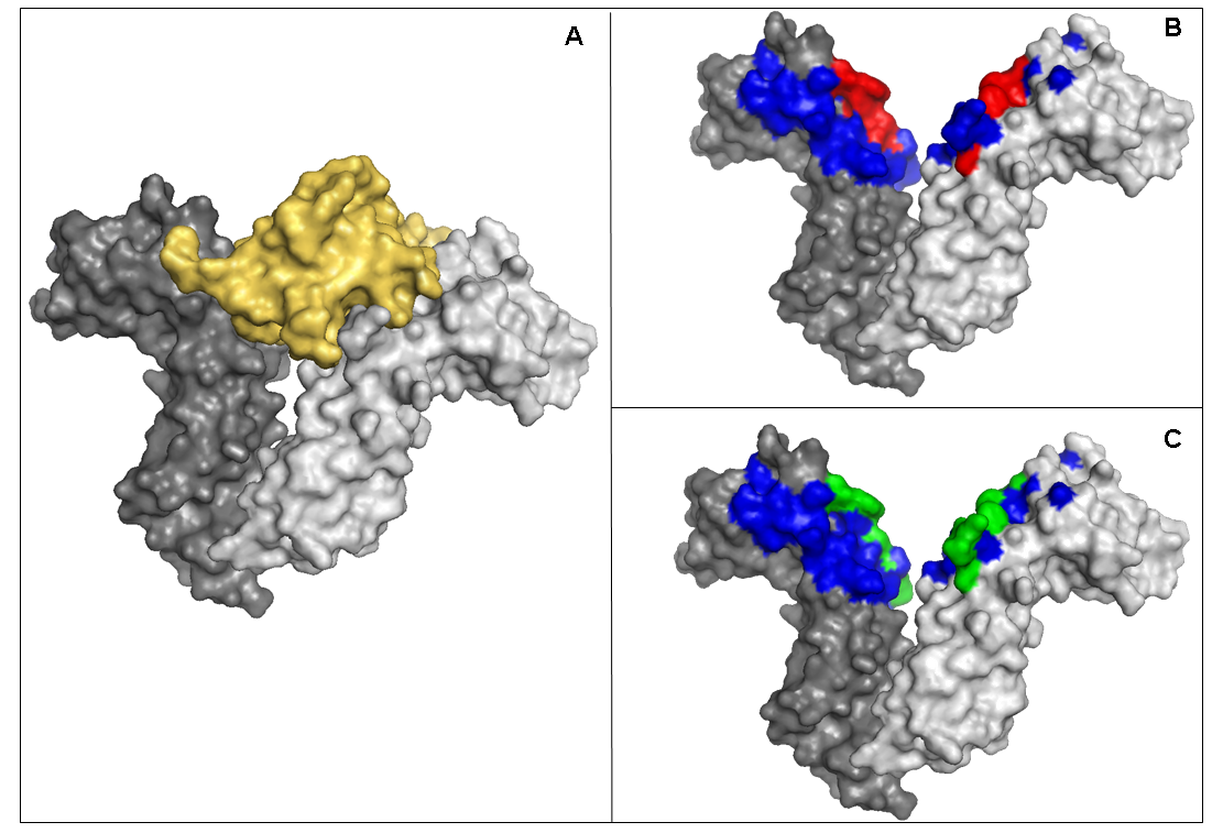 Hot spot detection software tools | Protein structure data analysis